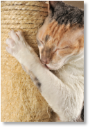 Scratching posts and nail trims are alternatives to declaw.