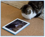iPad apps for kitty